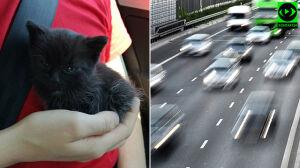 """""""Kierowca wyrzucił trzy kotki na ulicę. Na 112 powiedzieli, że nic nie zrobią"""""""