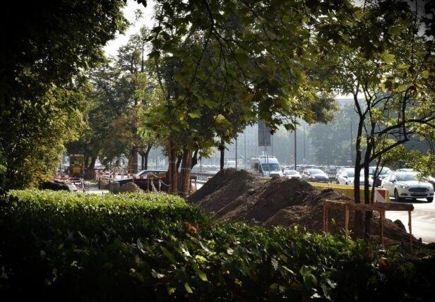 W ramach akcji zieleń pojawiła się na Wawelskiej Urząd Miasta