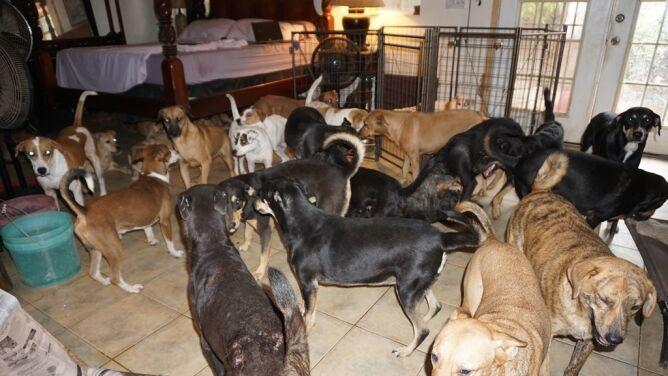 Na zewnątrz szalał Dorian, <br />a ona przygarnęła niemal setkę psów