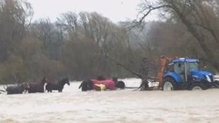 Strażacy nie pomogli, zajęli się tym rolnicy. Uratowali z powodzi siedem koni