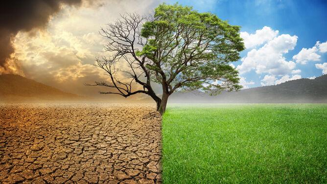 16 kilometrów na dekadę. Drzewa uciekają przed zmianami klimatu