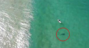Rekin w Australii podpłynął do surfera